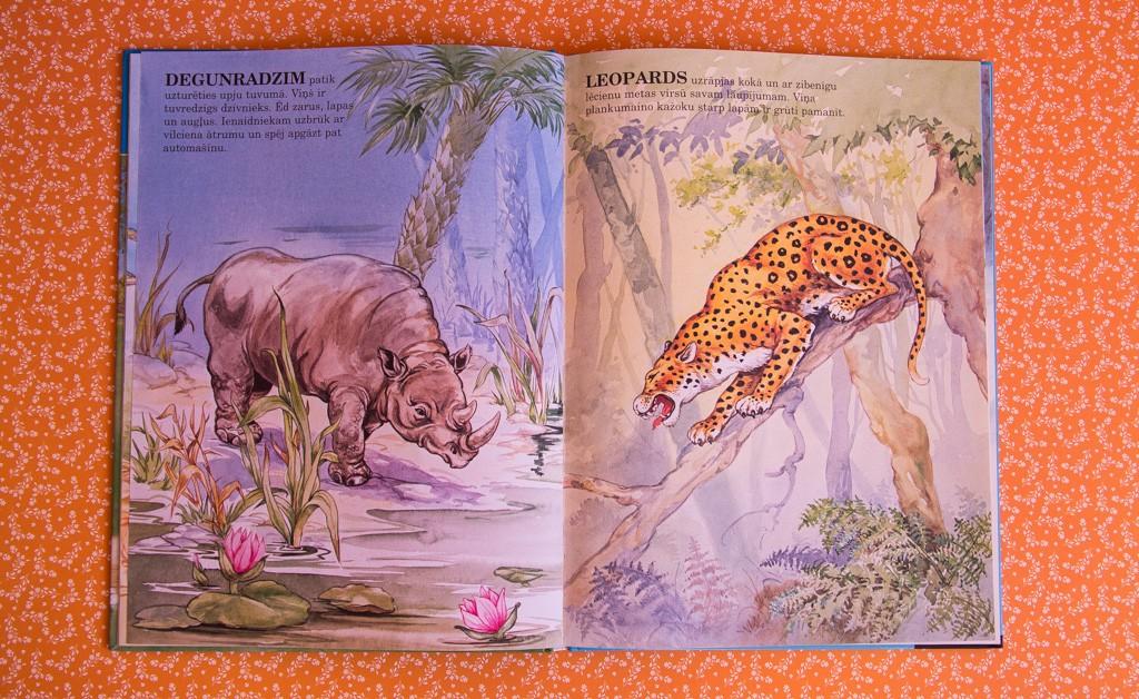 Foto: www.mammafe.lv